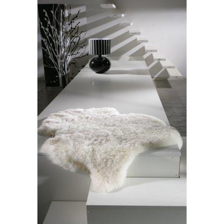 Valkoinen lampaantalja, Icelandic, lyhyt karva